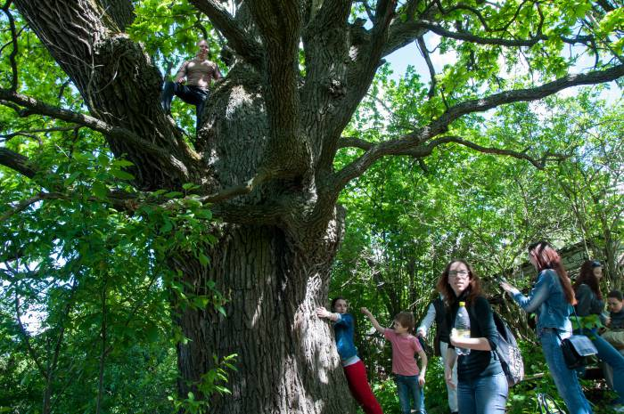 Двухсотлетний дуб может стать памятником природы. Фото Анастасии Вереск