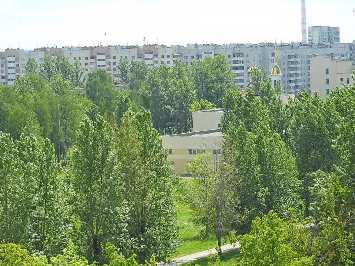 деревья города