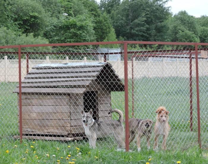 приют, животные, безнадзорные