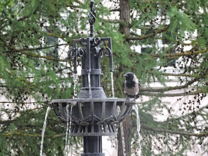 витебск, птицы, фонтан