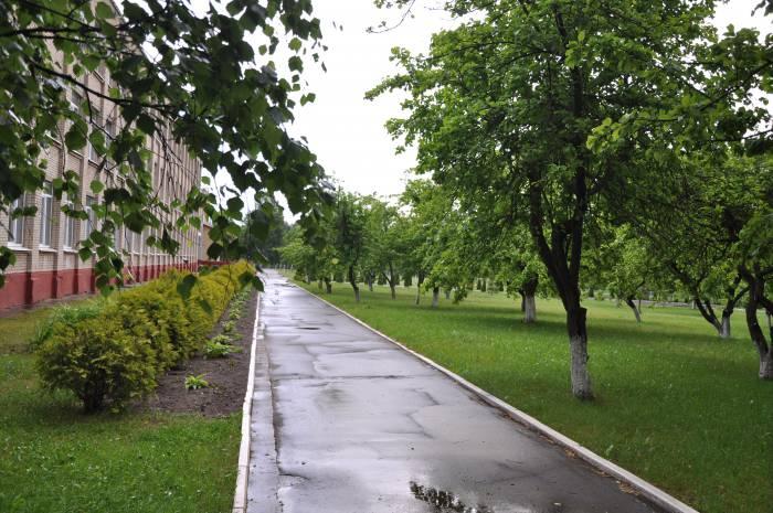 Яблони а территории школы №!. Фото Анастасии Вереск
