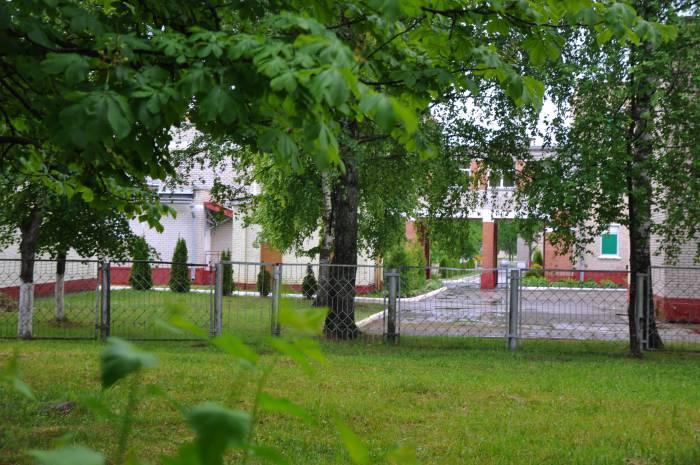 Несколько туй высажено и на заднем дворе. Фото Анастасии Вереск