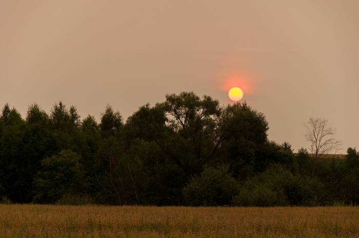 """Летнее солнцестояние также называют """"солнцеворот"""" или """"середина лета"""". Фото Анастасии Вереск"""