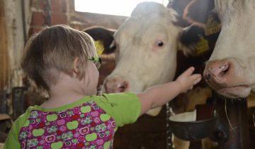 ребенок дети корова