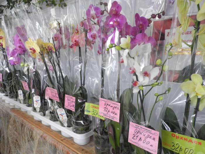 Большой выбор орхидей в цветочном павильоне возле «синего дома». Фото Светланы Васильевой