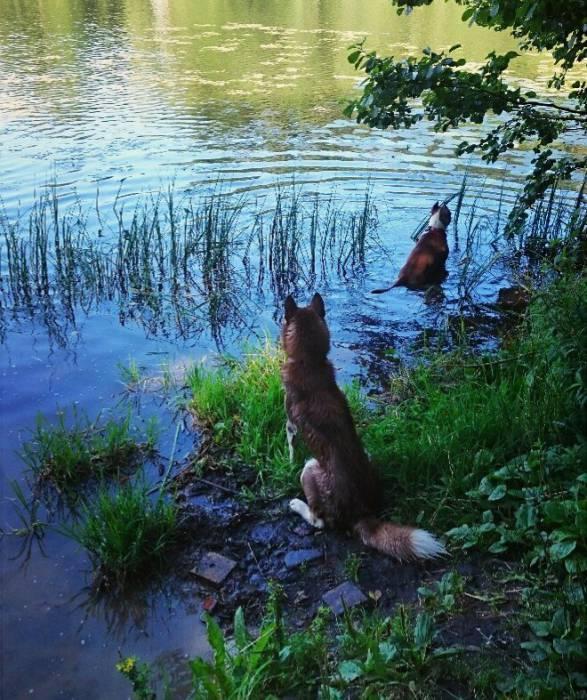 На летних каникулах. Фото из группы Гостиница для собак. Doghouse Вконтакте