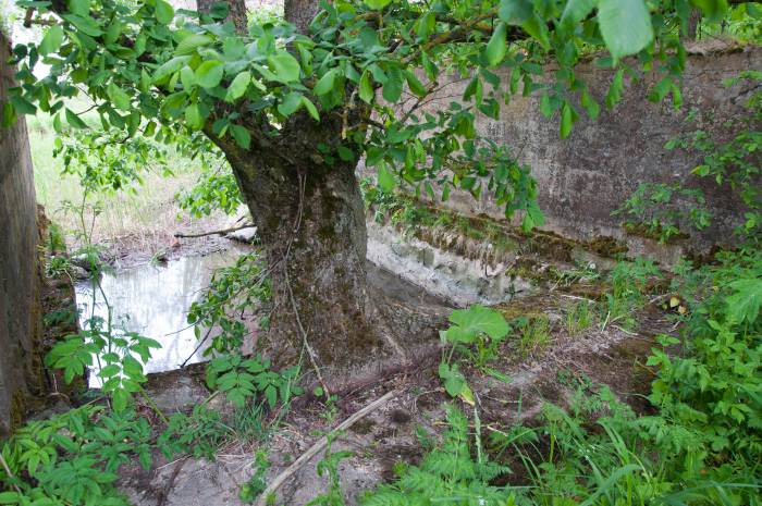 """Деревья тоже """"подстраиваются"""" под мельницу. Фото Анастасии Вереск"""