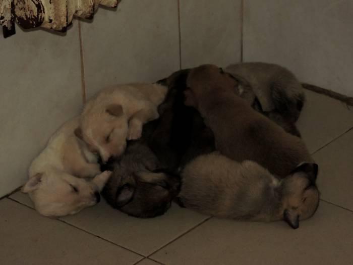 приют, собака, щенки