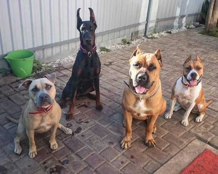 Постояльцы гостиницы. Фото из группы Гостиница для собак. Doghouse Вконтакте