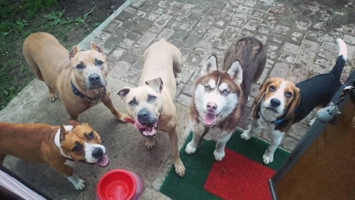 Что-то вкусное дают? Фото из группы Гостиница для собак. Doghouse Вконтакте