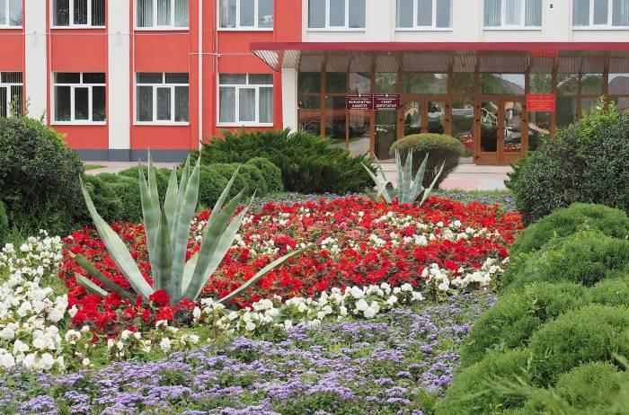 Агава возле райисполкома в Дубровно. Фото Светланы Васильевой