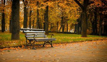 Витебский листопад в парке Партизанской славы. Осень 2016. Фото Светланы Васильевой