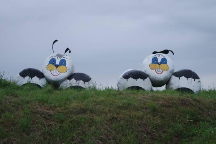 Симметричные зайчики. Фото Анастасии Вереск