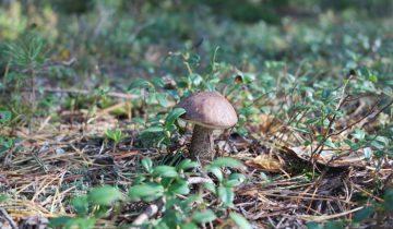грибы лес