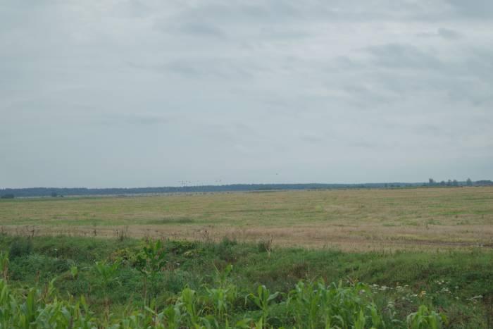 Поле, на котором можно наблюдать за журавлями. Фото Ольга Витебская