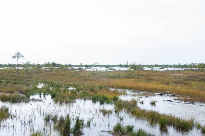 Бескрайние болота Ельни очень напоминают пейзажи осенней тундры. Фото Анастасии Вереск