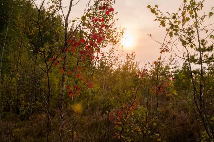 Закат на Ельне. Фото Анастасии Вереск