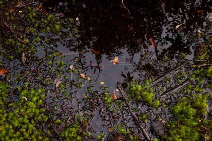 Вода на болотах рыжая, ее окрашивает торф. Фото Анастасии Вереск