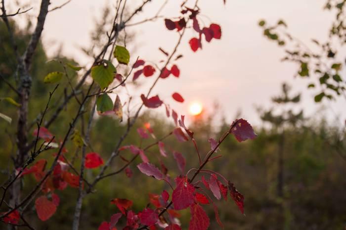 Осенний закат. Фото Анастасии Вереск