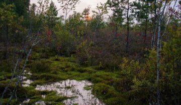Ельня на закате. Фото Анастасии Вереск