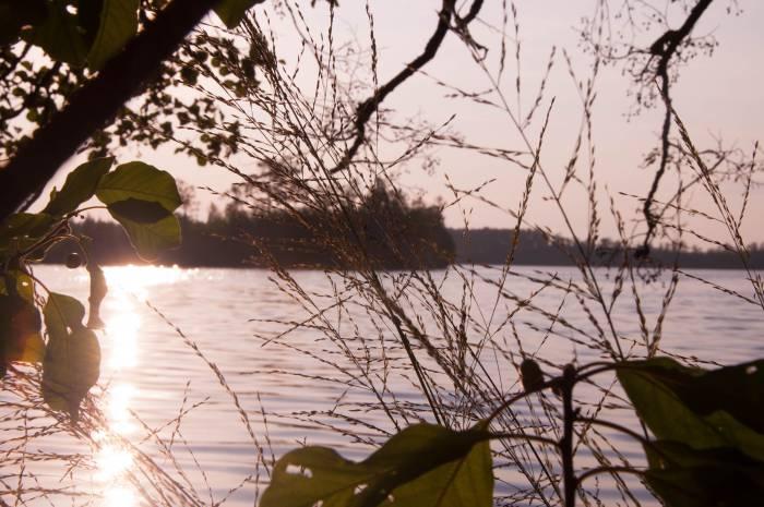Утро на болотных островах. Фото Анастасии Вереск
