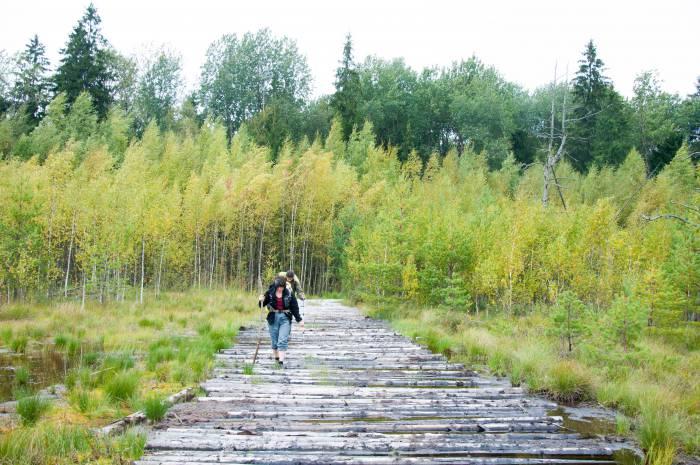 Идти по гати легко, приятно и сухо. Фото Анастасии Вереск