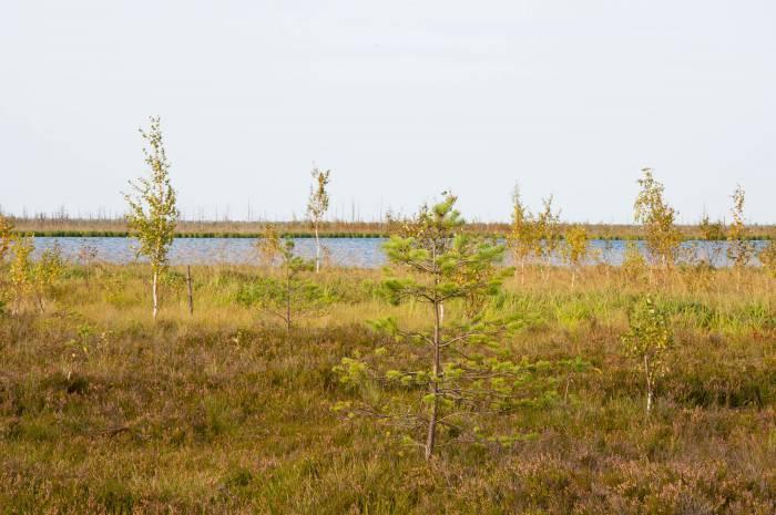 Среди уникальных редких растений Ельни -береза карликовая, морошка приземистая, клюква мелкоплодная, сфагнум мягкий,ива черничная и баранец обыкновенный.Фото Анастасии Вереск