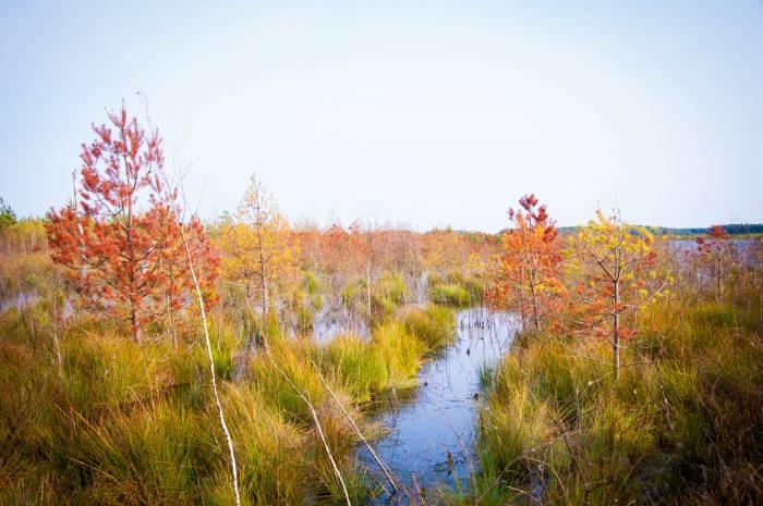 Осенние краски древнего болота. Фото Анастасии Вереск