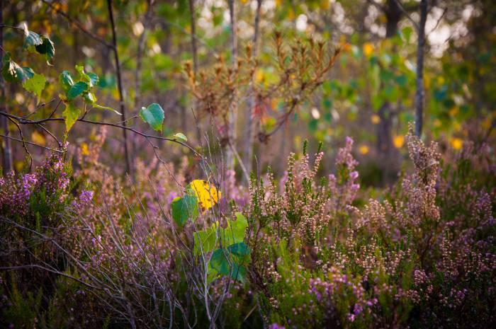 Осень в Ельне. Фото Анастасии Вереск