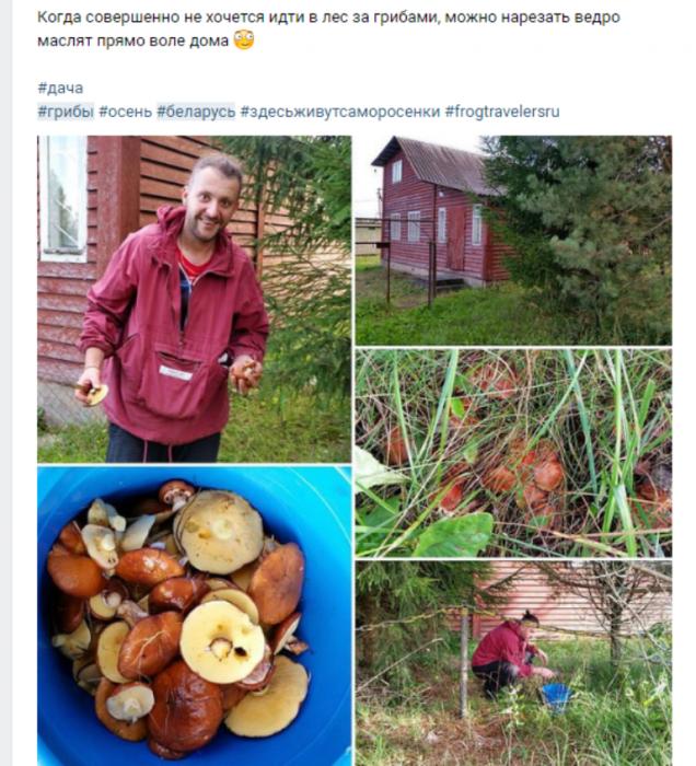 грибы, лес, фотография, Instagram