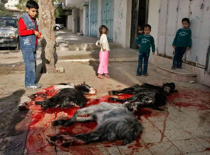 Газа. Жертвоприношение окончено. Фото trinixy.ru