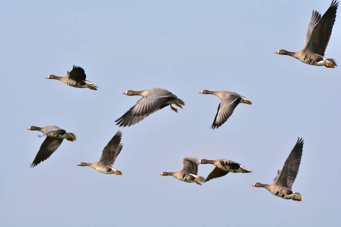 В этот день нужно постараться увидеть улетающих птиц и загадать желание