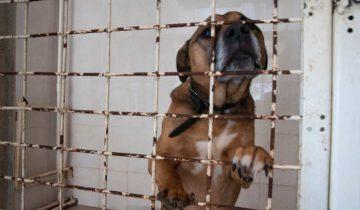Рой - породистый пес, у него есть проблемы с кишечником. Рою не нужна операция, ему нужен заботливый и любящий хозяин. Фото Анастасии Вереск