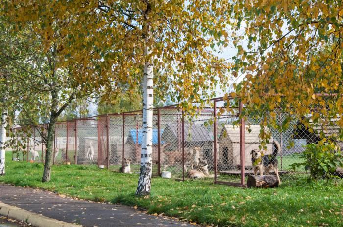 Вольеров на улице стоит очень много. Фото Анастасии Вереск