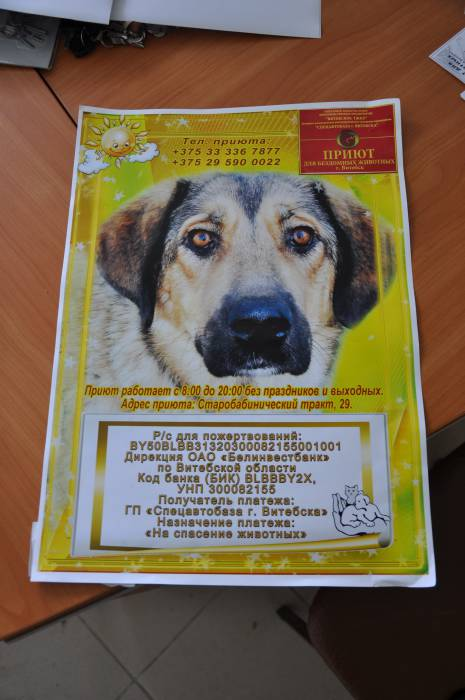 Новые плакаты для витебского приюта. Фото Анастасии Вереск