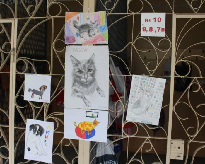 гимназия №3, приют для животных, акция