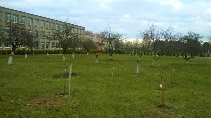 А вот так выглядит школьный сад уже 23 октября. Фото Анастасии Вереск