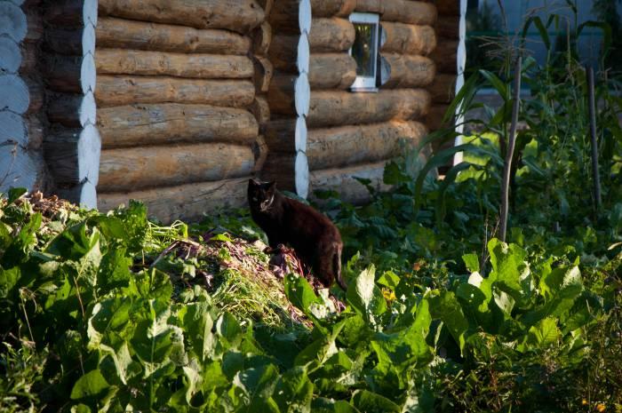 """Осень - это когда """"не весь еще урожай сняли, хозяин!"""" Фото Анастасии Вереск"""