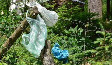 лес мусор