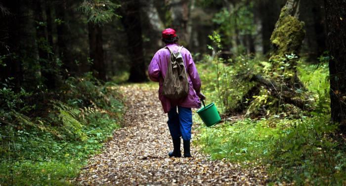 лес женщина грибы