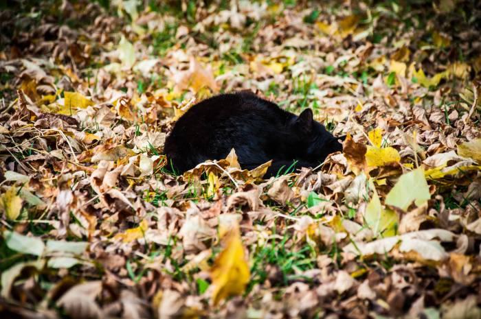 Осень - это шуршащий сон. Фото Анастасии Вереск