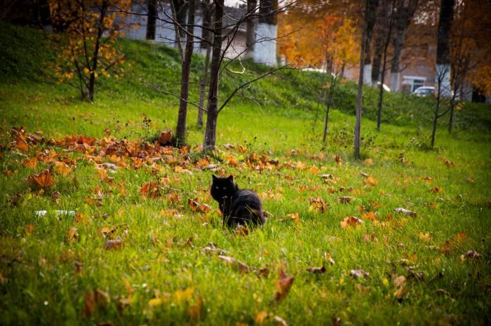 Осень - время магии и волшебства. Фото Анастасии Вереск