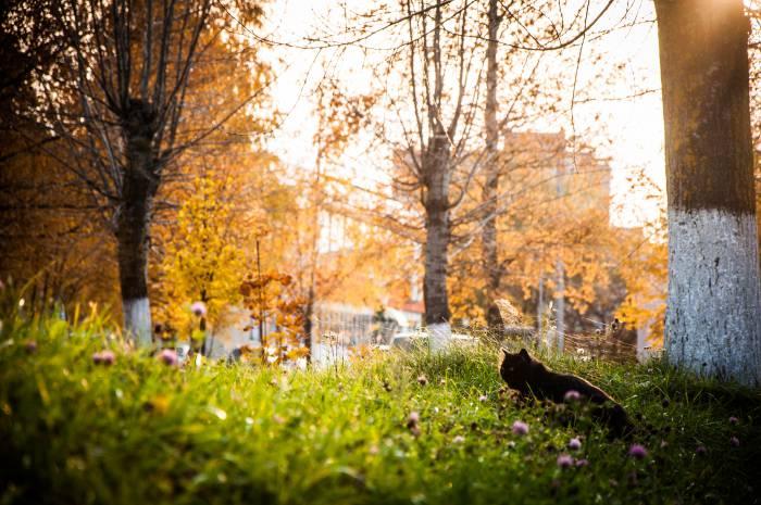 Осень и светит, и греет. Фото Анастасии Вереск