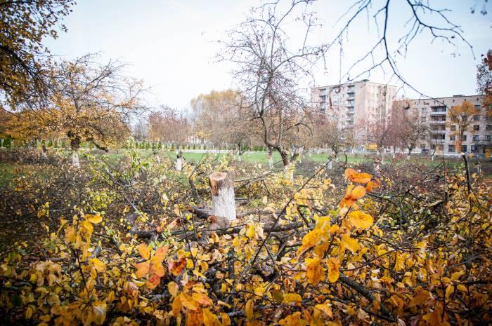 Деревья возле школы №! города Новолукомля 18 октября. Фото Анастасии Вереск