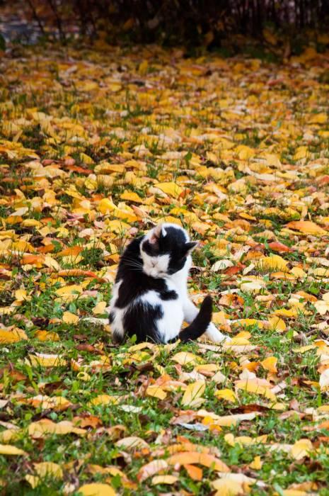 Осень - время прибраться к зиме. Фото Анастасии Вереск