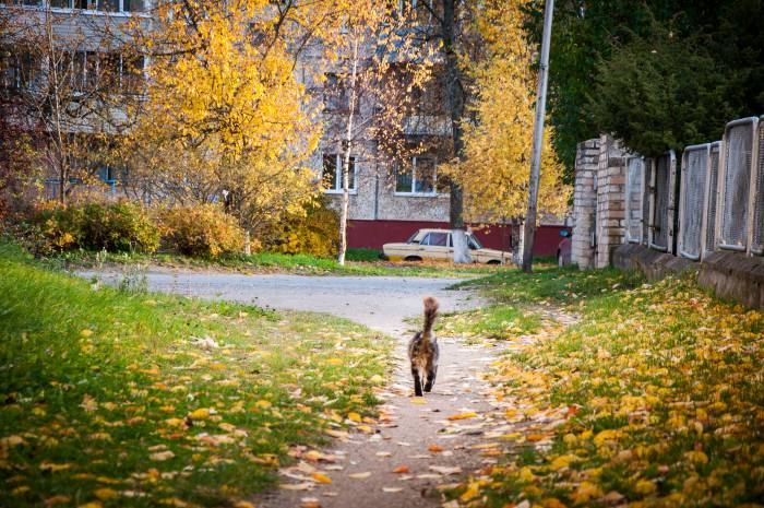 Осень - это дороги из золота. Фото Анастасии Вереск