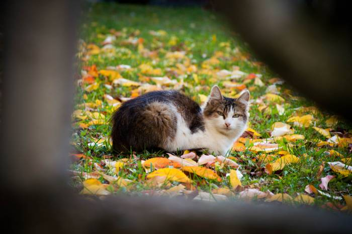 Осень - это капля тепла на прощанье. Фото Анастасии Вереск