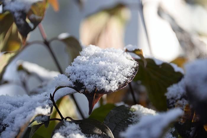 Первый снег на Покров - это хорошо