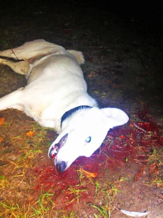 собака, убийство