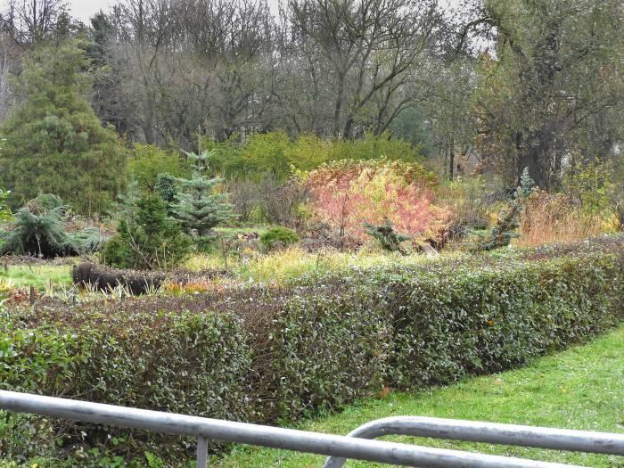 Ботанический сад Витебска. Фото Светланы Васильевой